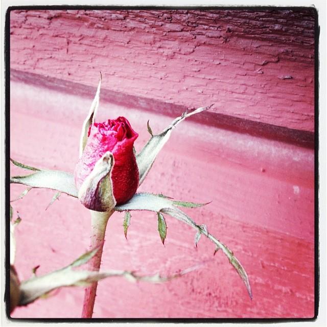 December. +8 and sunny. #flowers #flower #TagsForLikes #petal #petals #nature #beautiful #love #pretty #plants #blossom #sopretty #spring #summer #flowerstagram #flowersofinstagram #flowerstyles_gf #flowerslovers #flowerporn #botanical #floral #florals #insta_pick_blossom #flowermagic #instablooms #bloom #blooms #botanical #floweroftheday
