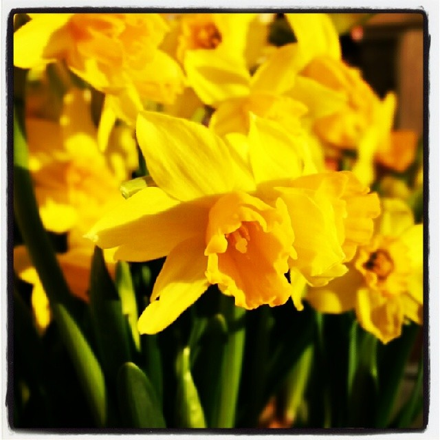 Glad påsk alla vänner!