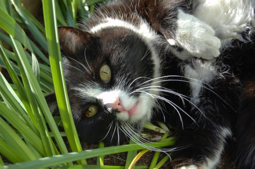 Sebastian i gröngräset förra sommaren.
